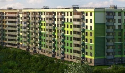 Клены в районе Красносельский